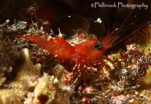 Shrimp-shot-with-macro-lens