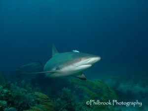 Shark taken with standard wide angle lens