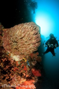 diver-with-sunball