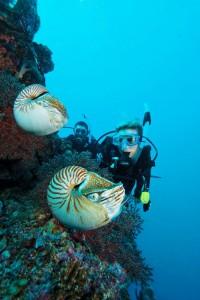 Multi-Level Diver Specialty Courses