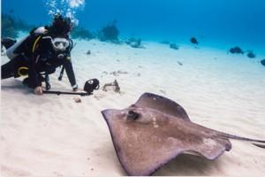 sealife-aquapod-divers
