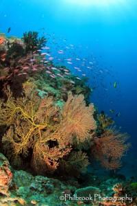 Fiji reef scene