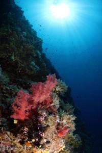 reef scene with sunball