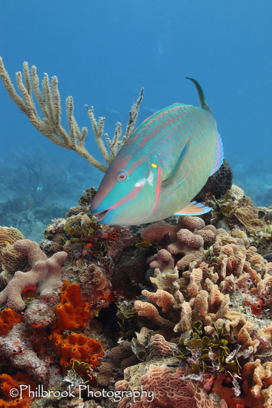 Bonaire women's trip