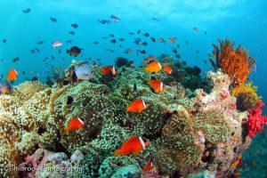 Beqa Lagoon reef scene