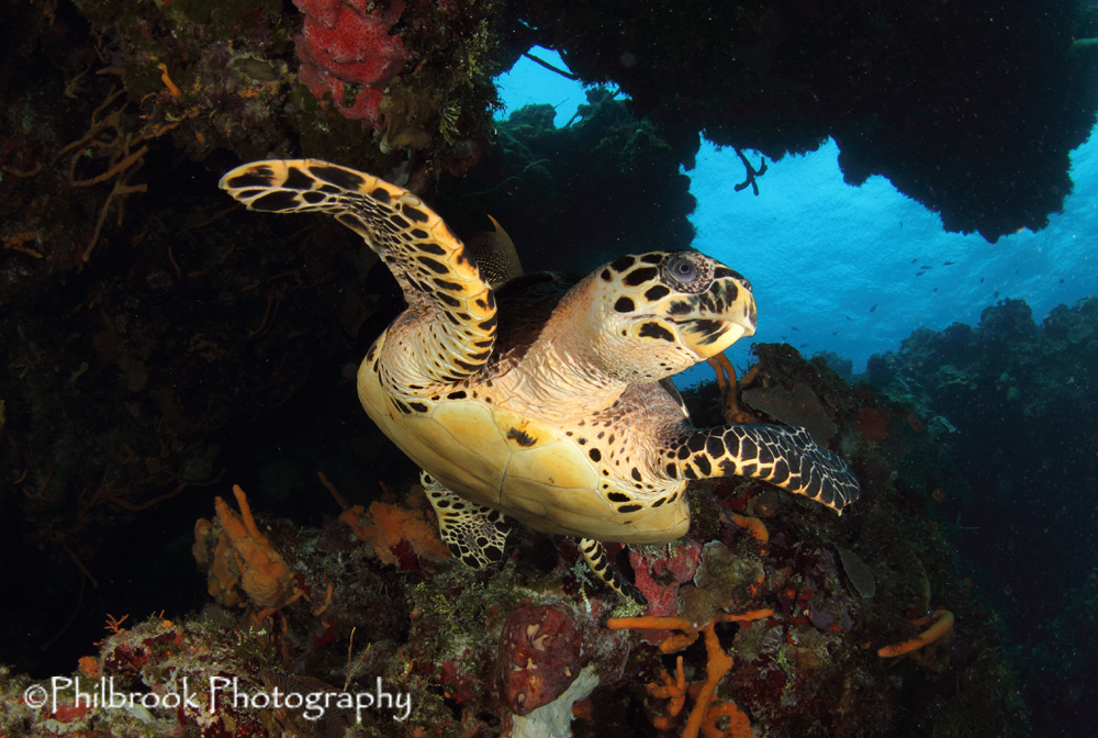 turtle, Cozumel