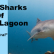 tiger sharks of beta lagoon